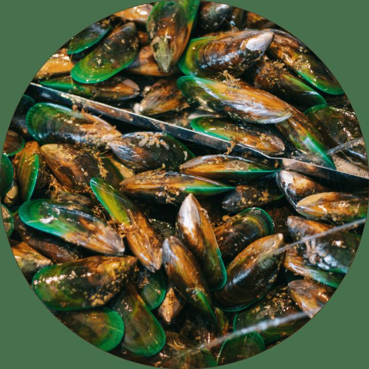 Mills Bay Fresh Live Mussels, Buy Online