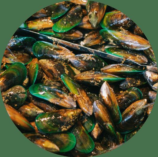 Mills Bay Mussels Buy Online